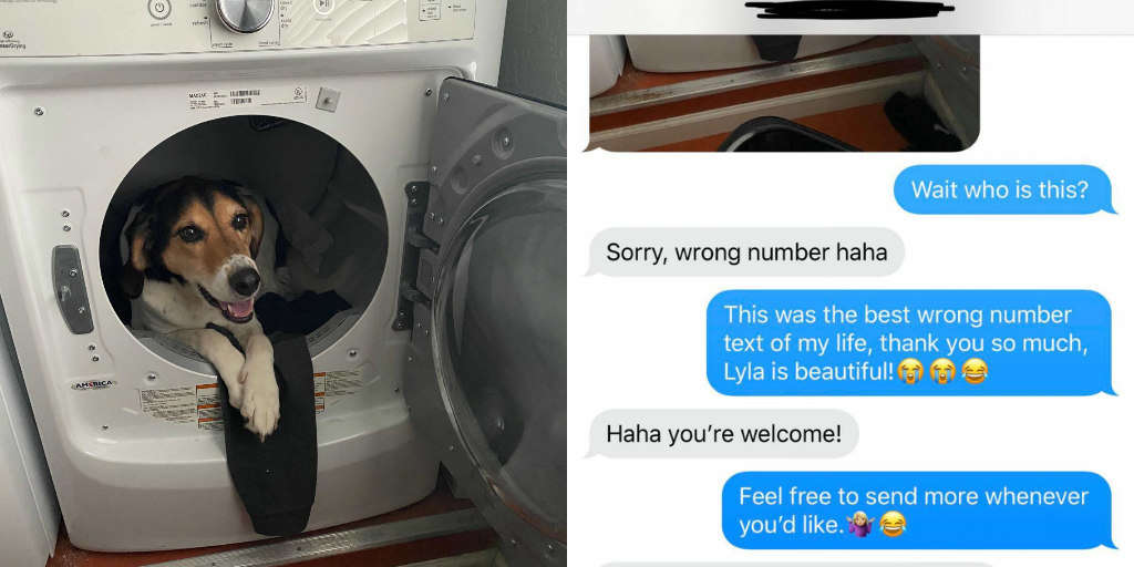 Woman Gets 'Wrong Number' Photo Of Dog And Couldn't Be Happier