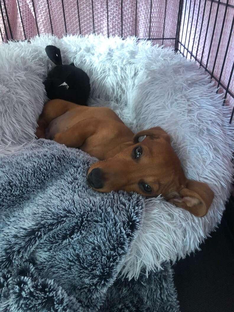 dog loves bed
