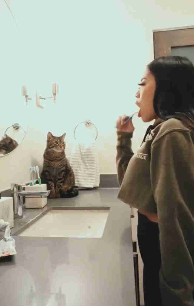 Cat watches his mom brush her teeth