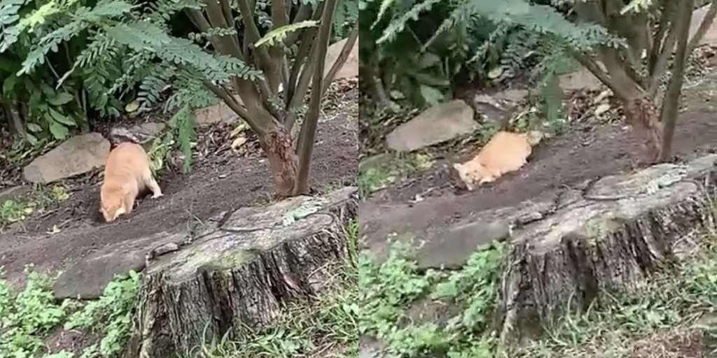 Cat Caught Digging Dozens Of Holes To Frame His Dog Siblings