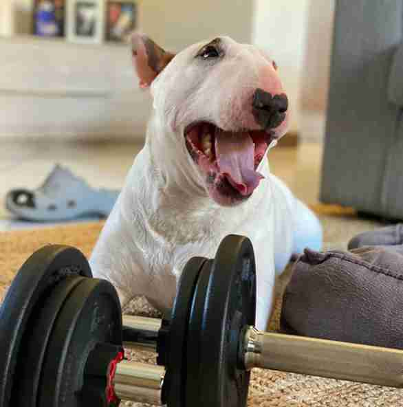 Sparky the dog helps his dad workout during quarantine