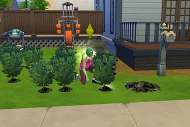 sims trash plants