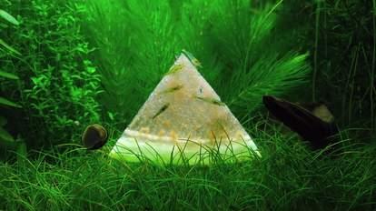 aquaculture vids