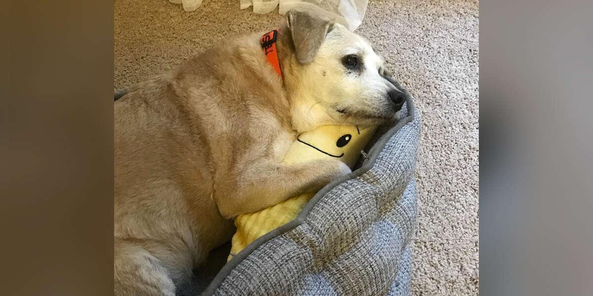 20-Year-Old Dog Still Snuggles Her Stuffed Banana