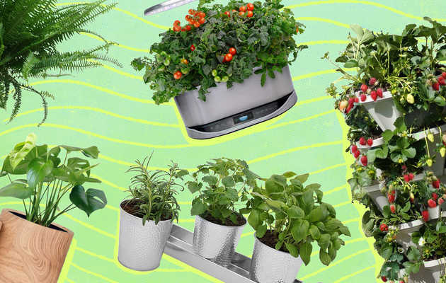 Everything You Need to Start Your Own Indoor Garden, According to Experts