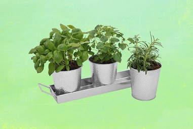 basil thyme rosemary herbs