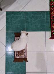 cat prays with family
