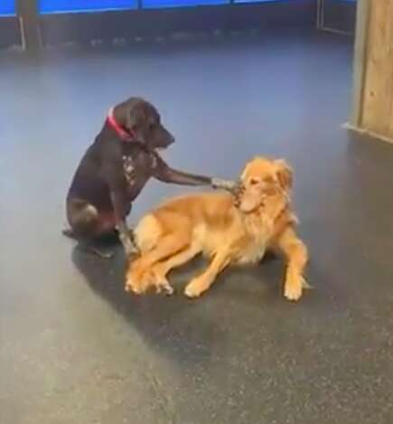 Dog pets dogs at doggy daycare