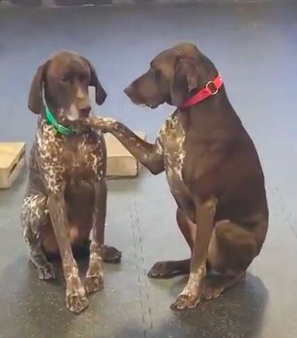 Ruby pets other dogs at daycare