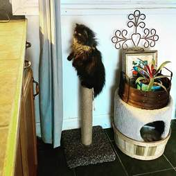 cat stands on scratching post