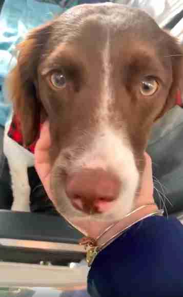 Flight attendant pets dog on airplane