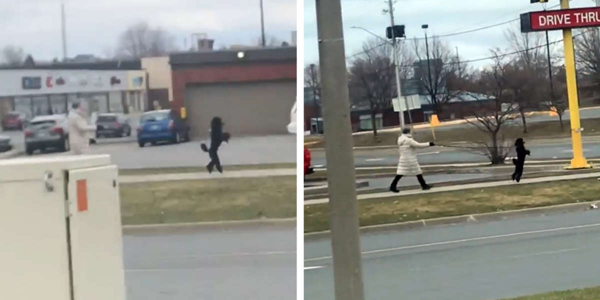 Guy Spots A Dog Happily Walking Down The Street Like A Human