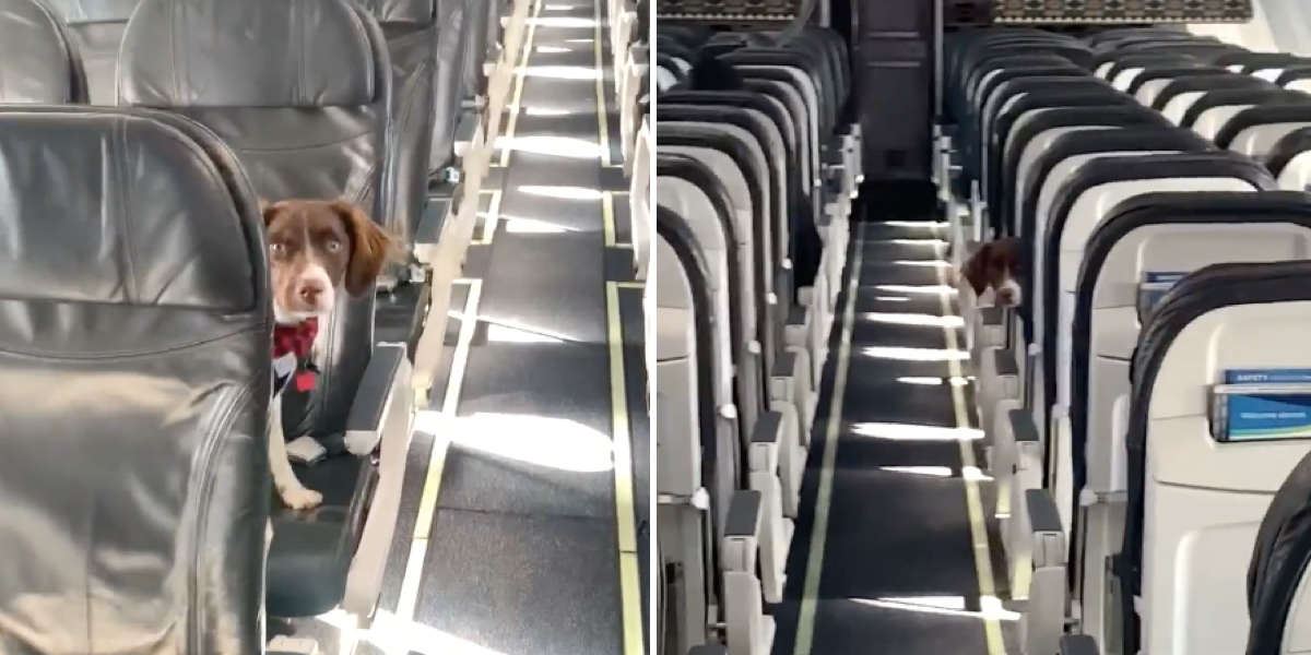 Flight Attendant Plays Hide-And-Seek With Dog On An Empty Plane