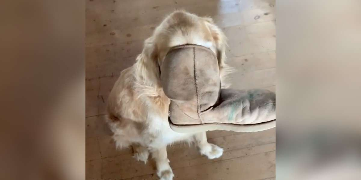 Dog Gets Boot Stuck On Face And Pretends Absolutely Nothing Is Wrong