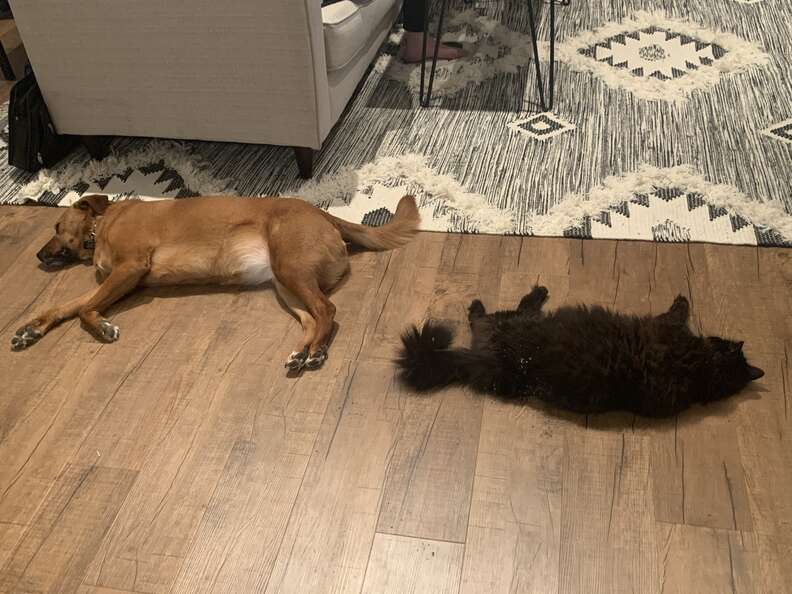 Best friends Moose and Marvin relaxing