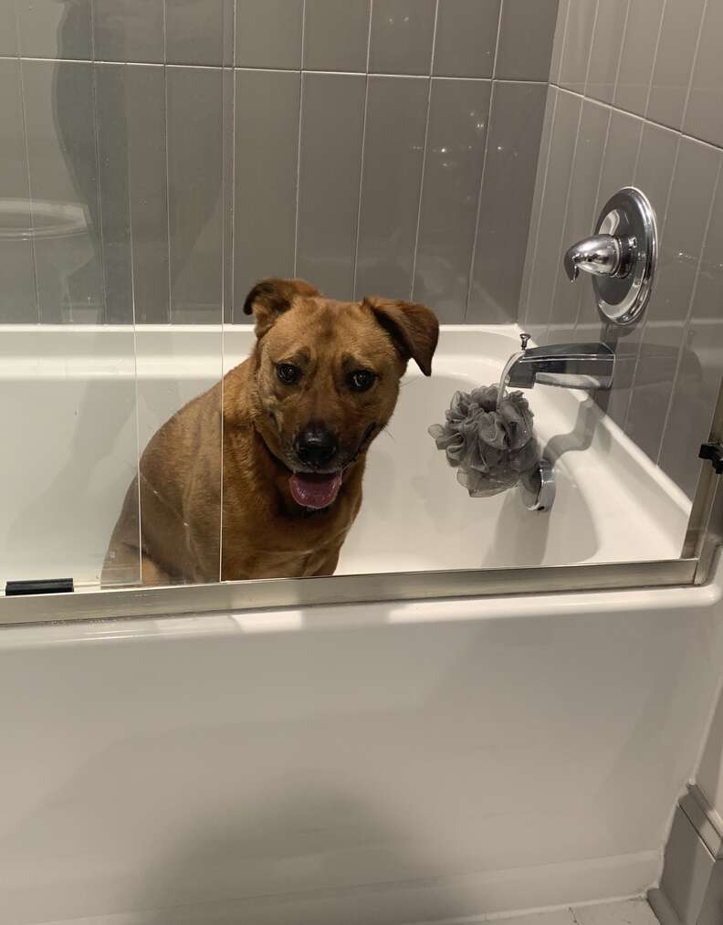 Moose the dog hiding in the shower