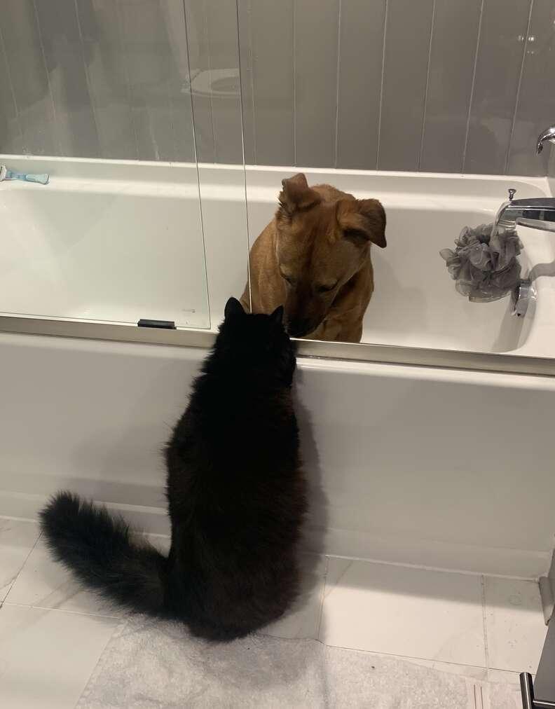 Cat comforts dog during thunder storm