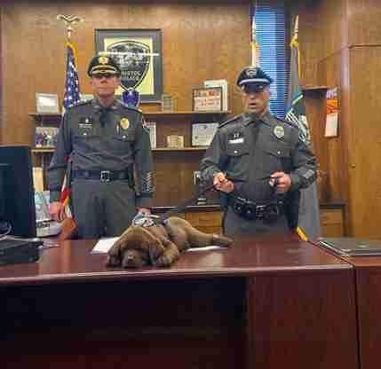Dog falls asleep during his swearing in ceremony