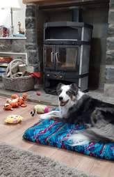 Mika the dog protects his toys