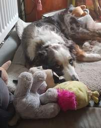 Mika snuggles with his toys