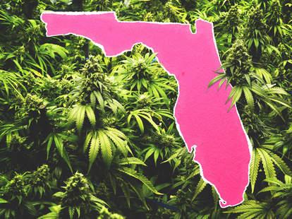 florida weed