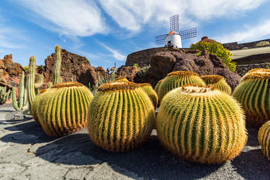Cactus garden lanza