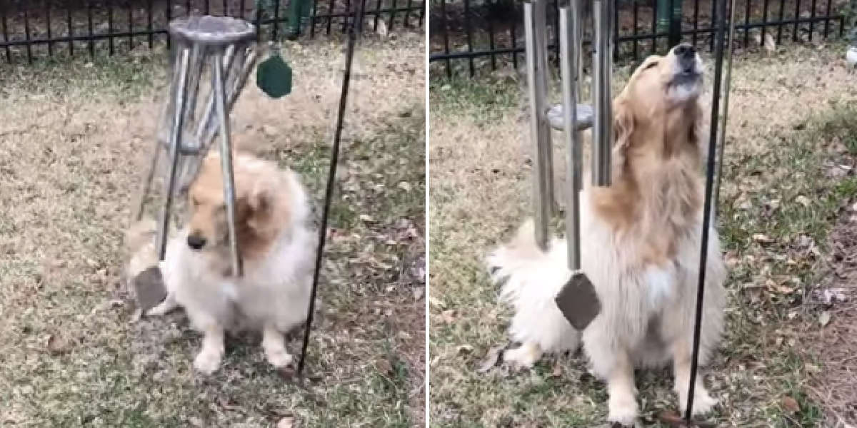 Dog Plays The Wind Chimes Every Day So She Can Sing Along