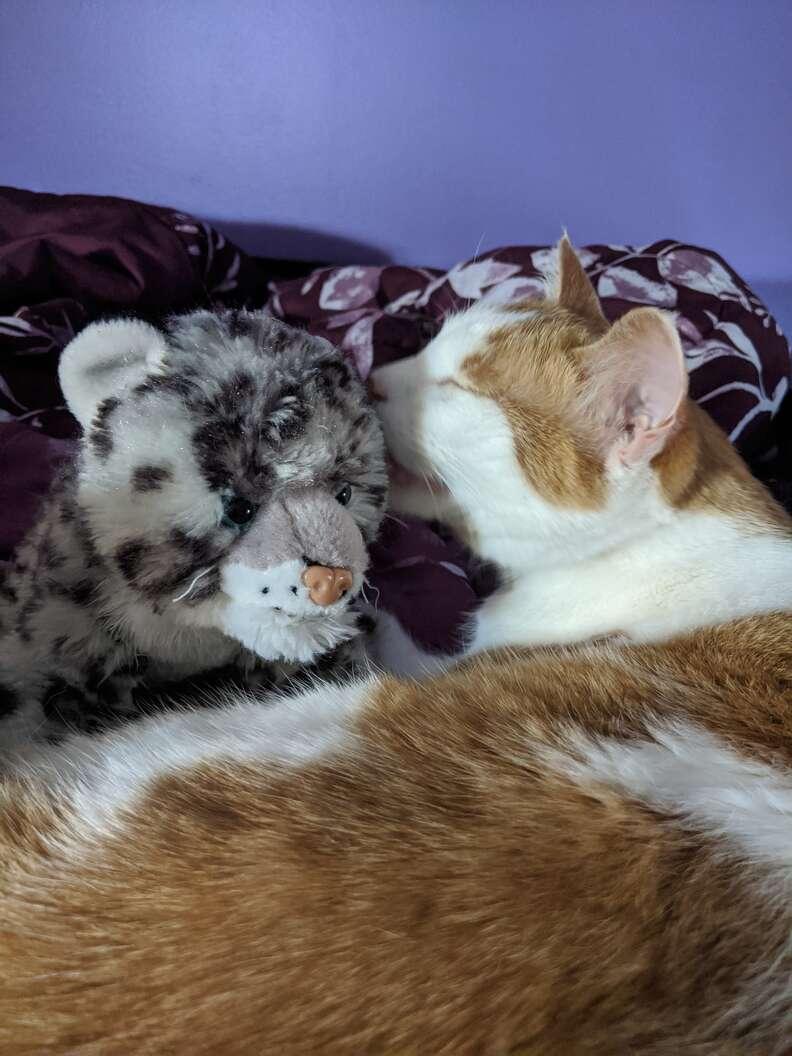 Cat licks his favorite toy