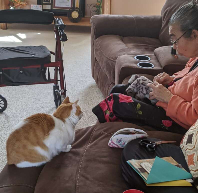 Cat watches Grandmother perform surgery on toy
