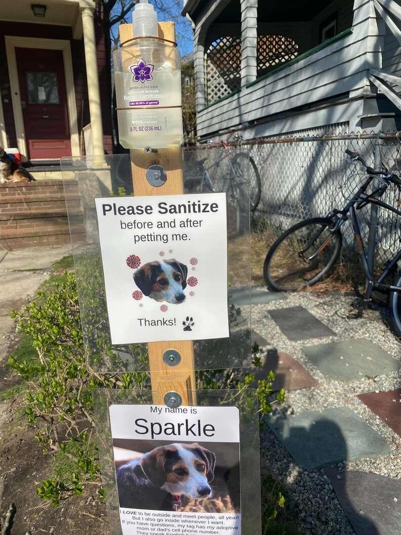 Dog has a sanitizing station