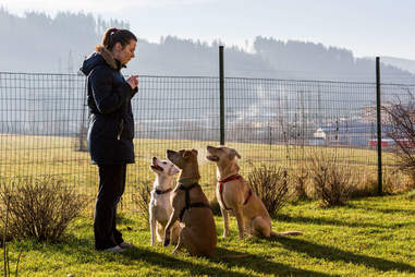 A woman trains three dogs.
