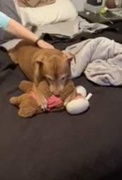 mom fixes dog's toy