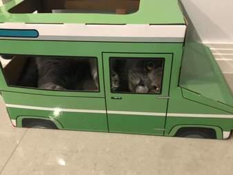 cat jeep