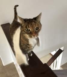 Cat loves to wear her little scarf