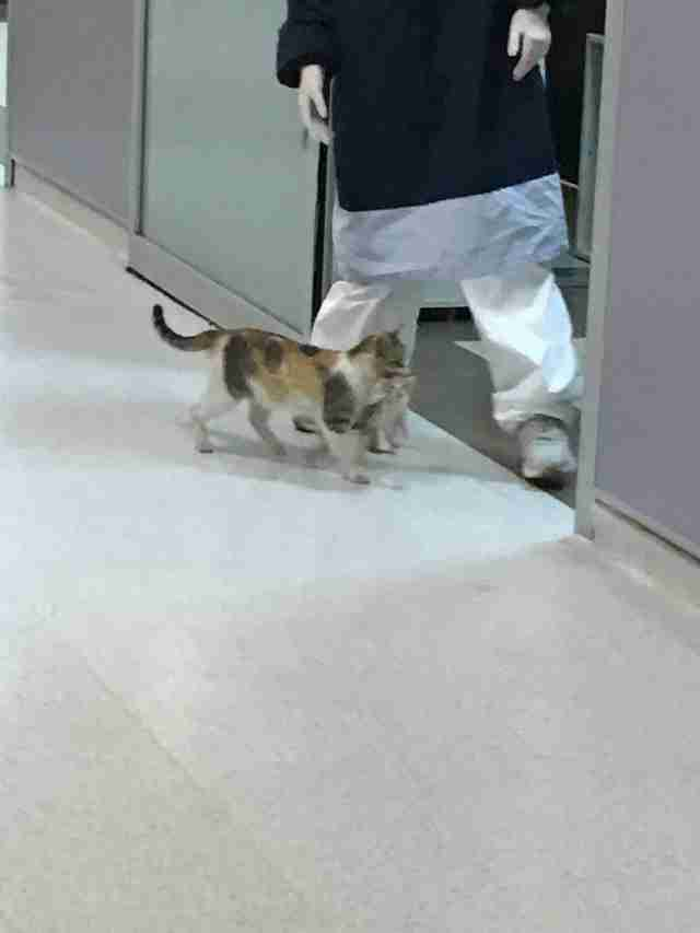 Stray cat brings her baby to Turkish hospital