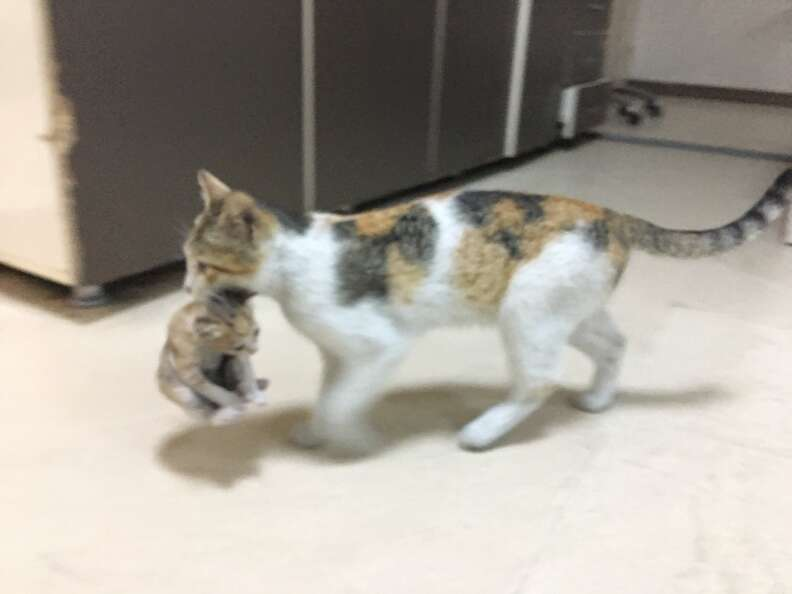 Cat brings her baby into the hospital