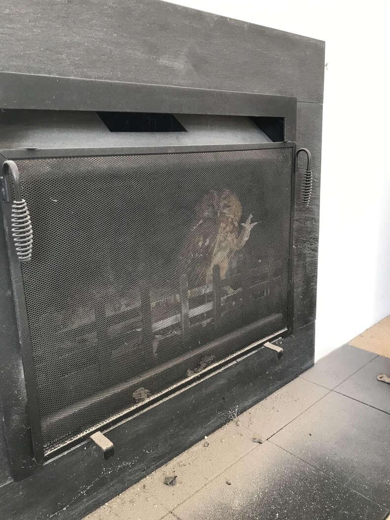 owl stuck in fireplace
