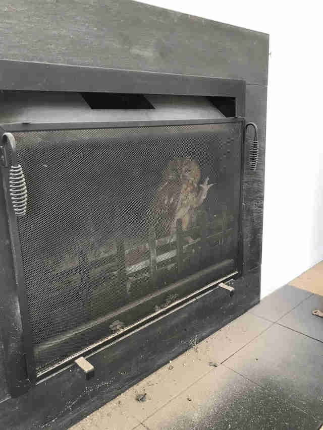 owl stuck in fireplace