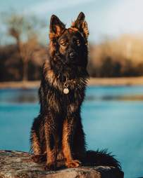 Kai the birdbath loving dog