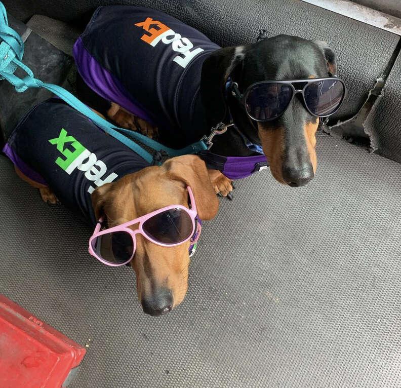 fedex dogs
