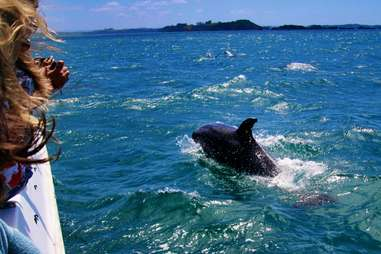 a person watching a dolphin breach in the water off the Bay of Islands, New Zealand
