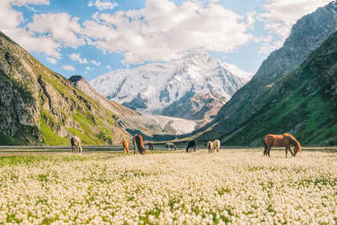 horses grazing in a flower fields at the base of mountains