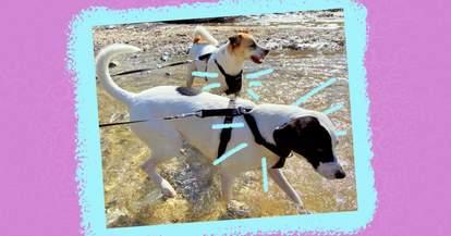 kurgo tru fit harness for dogs