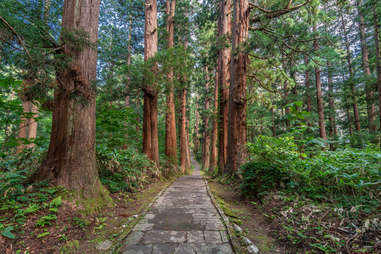 Japanese Forest