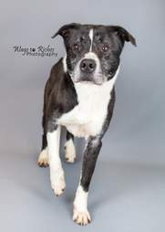 Grey the shelter dog poses for a photo