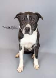 Grey the shelter dog after being in the shelter for 7 years