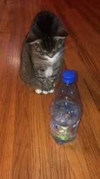 cat spray bottle