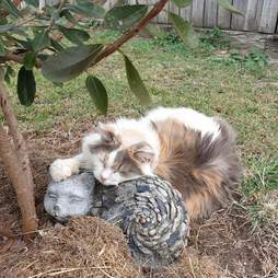 cat loves rock