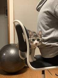 Cat stops dad from sitting in chair