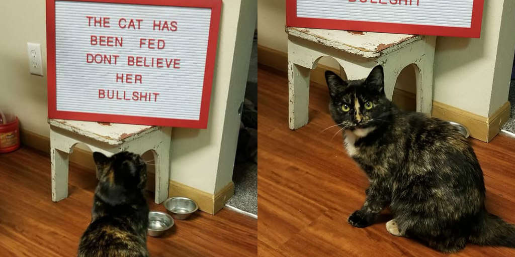 Cat Is Completely Outraged By Very Untrue Sign Her Family Put Up